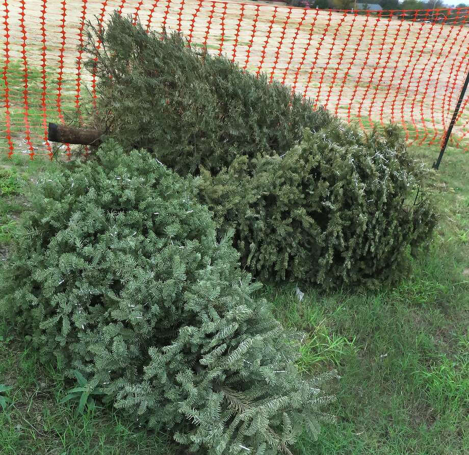 used christmas trees are often left on curbs for waste collectors after the holidays but