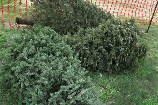 Laredo's Solid Waste Services will be picking up bare, real Christmas trees at the curb as part of trhe regualr yard waste collection service on your normal lawn-clipping collection day. If you care to discard your tree earlier, you can drop it off at four locations through out the city: Fire Station #12, 9402 Northeast Bob Bullock Loop; Used Oil Site, 5510 Daughtery Avenue; City of Laredo Landfill, 6912 Highway 359 and Fire Station #9, 13301 Mines Road. The trees will be recycled into mulch that is available free of charge for city residents, if self-loaded. The mulch pile is at the Landfill.