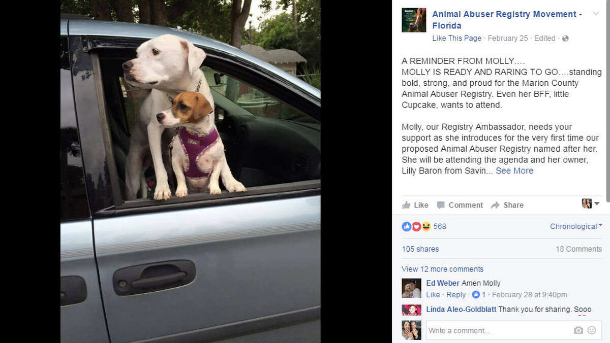 Molly, a white boxer mix, is the face behind Marion County, Fla.'s new law that requires animal abusers to register in much that same way sex offenders have to register.>>KEEP CLICKING TO SEE OTHER INSTANCES WHERE ANIMAL ABUSE/CRUELTY HAS BEEN IN THE NEWS.Photo: Animal Abuser Registry Movement - Florida Facebook Screenshot