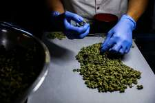 Employee Inmer Avalos sorts marijuana at cannabis dispensary, The Green Cross, in San Francisco, California, on Friday, Oct. 28, 2016.