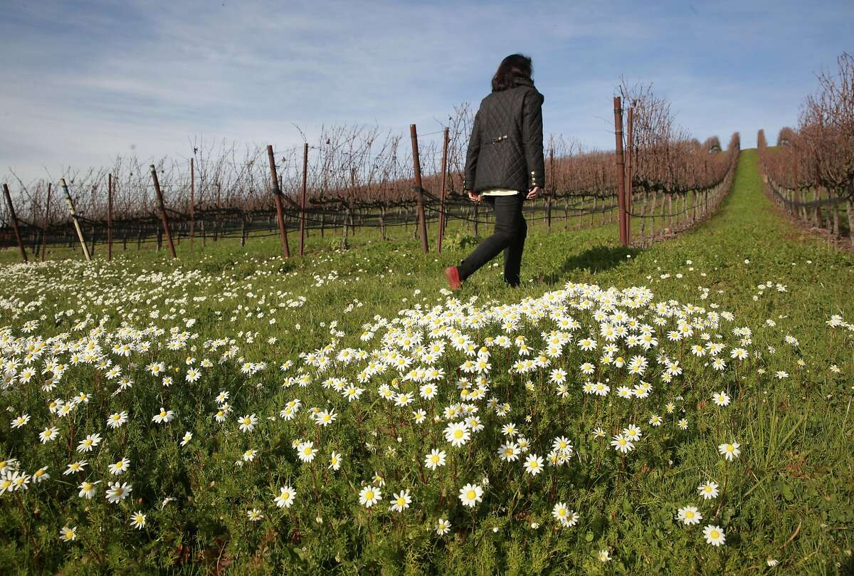 Rickey Trombetta Stancliff CEO of Trombetta Family Wines and the current president of the Petaluma Gap Winegrowers Alliance, she is seen at the Gap's Crown Vineyard in Pengrove, California, on Tuesday December 27, 2016.