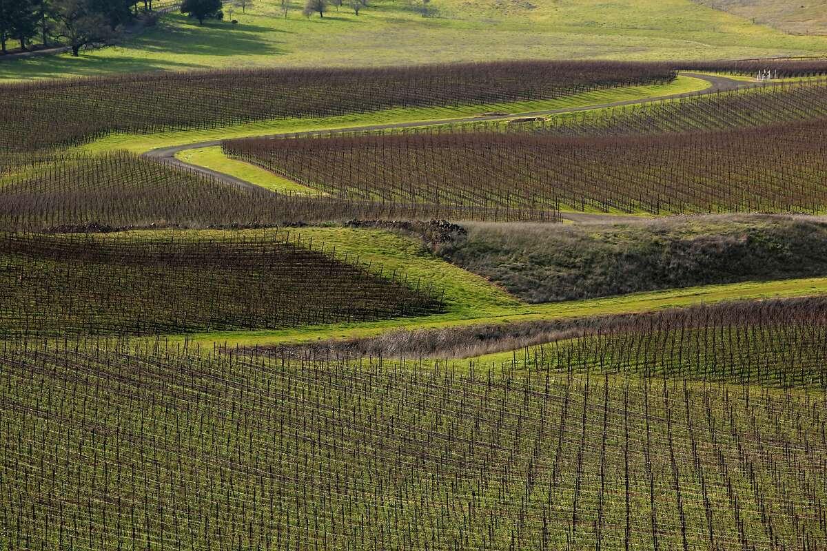 Winter vines at the Gap's Crown Vineyard in Pengrove, California, as seen on Tuesday December 27, 2016.