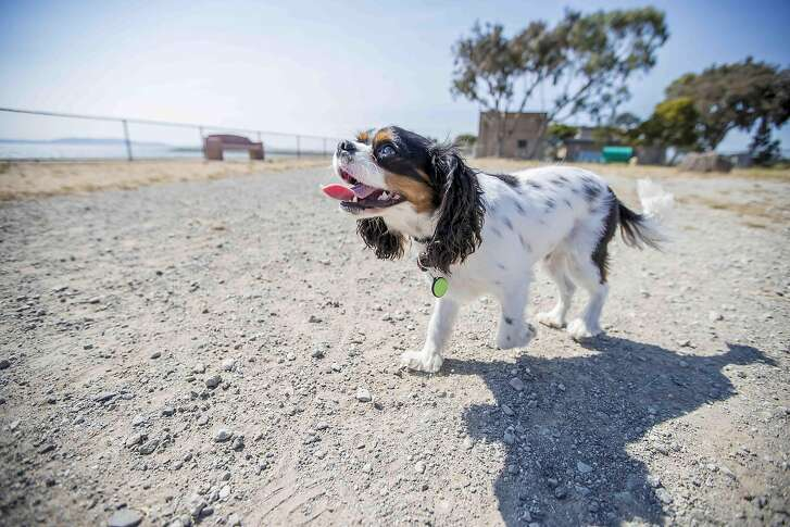 Fremont's Poof offers two fitness and activity trackers for dogs, the Bean ($49.99) and the Pea ($39.99) at�www.mypoof.com.