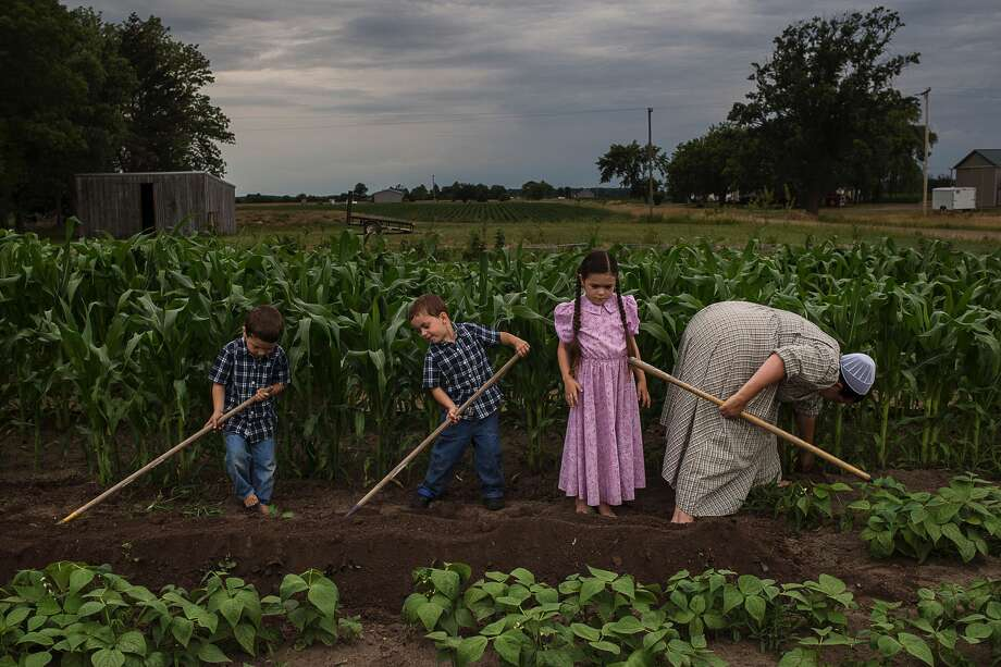 ERIN KIRKLAND | ekirkland@mdn.net From left, Alex, 4, Adrian, 4, Chloe, 7, and Freda work in the garden outside their Coleman home on July 7. The Jarmons grow corn, various berries, watermelon, squash and more. Photo: Erin Kirkland/Midland Daily News/Erin Kirkland
