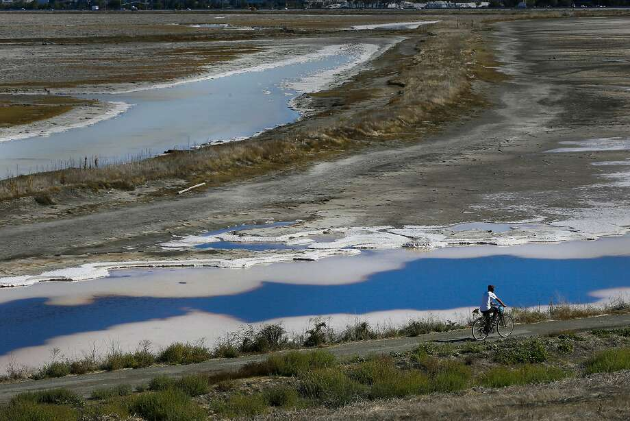 The coastal conservancy led the tidal wetlands restoration project that reclaimed 15,000 acres of former salt ponds in the South Bay. Photo: Michael Macor, The Chronicle