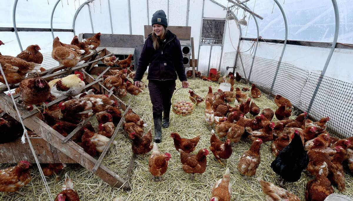 Stephanie Bartzick, 24, collects eggs at the Laughing Earth Farm on Monday Jan. 2, 2017, in Brunswick, N.Y. (Skip Dickstein/Times Union)