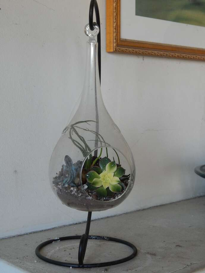 Earl Nickel's 8-inch tall teardrop terrarium. Photo: Earl Nickel