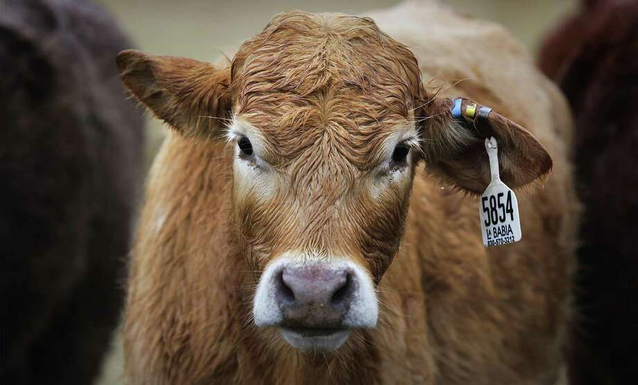U.S. consumers have seen their dollar stretch further at the meat case than two years ago, when beef prices were at record highs. But the drop hasn't been as steep for them as the plunge in cattle prices has been for ranchers. Photo: San Antonio Express-News /File Photo / © 2012 San Antonio Express-News