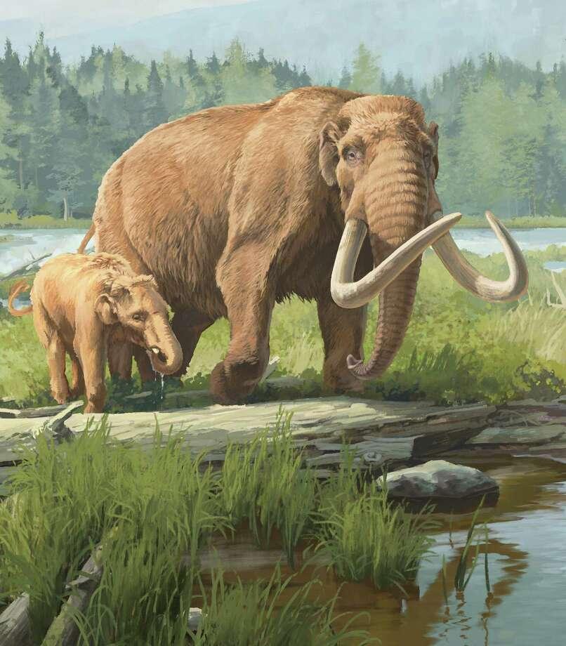 New York State Museum illustration of mastodons in boreal forest (Credit: Beth Zaiken)