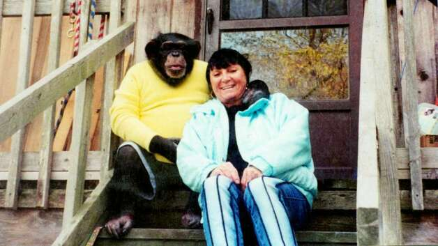 Travis the 10 year old chimpanzee picture with his owner Sandra Herold, photo taken in 2002. Photo: Contributed Photo / Stamford Advocate Contributed