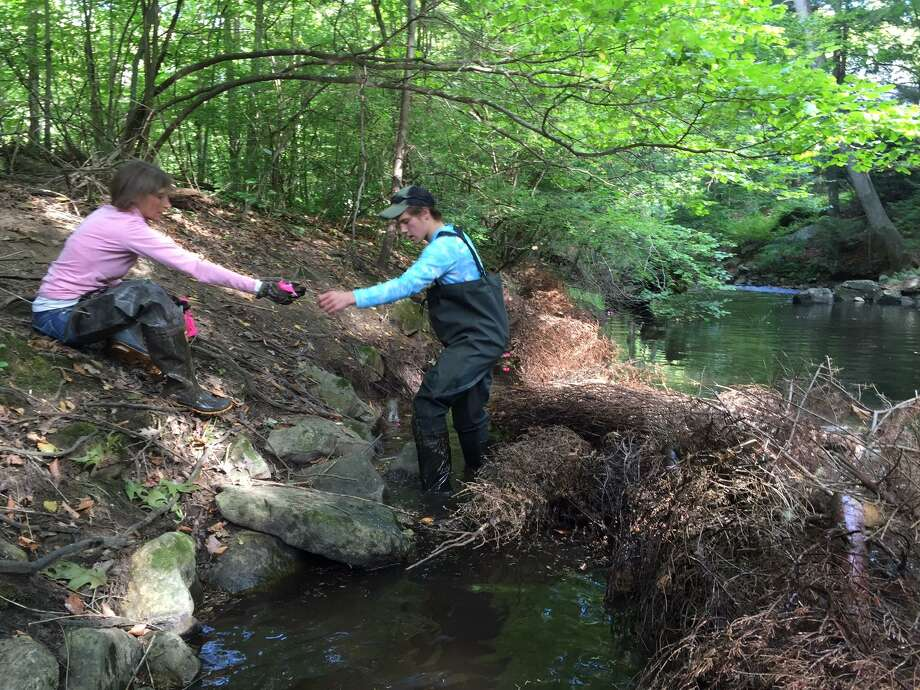 Community members participating in local river restoration work with the Mianus Chapter of Trout Unlimited. Photo: Contributed Photo