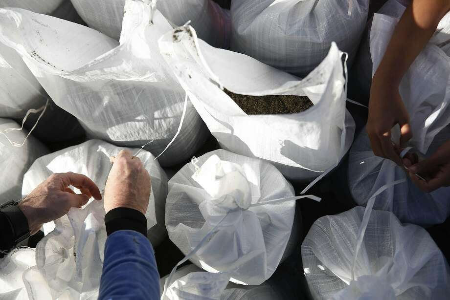Gary Burch (left) and his daughter Nija Burch, 10, tie up sandbags after filling them along Sunny Hills Drive with others on Thursday, January 5, 2017 in San Anselmo, Calif. Photo: Lea Suzuki, The Chronicle