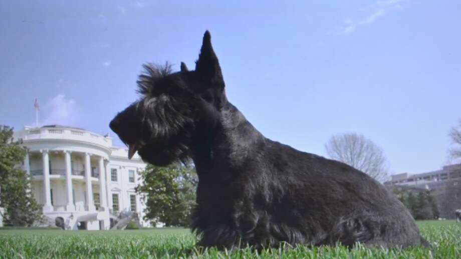 This video capture from the 2017 Plainview High's UIL documentary shows Barney, President George and Laura Bush's pet Scottish terrier, on the lawn of the White House.