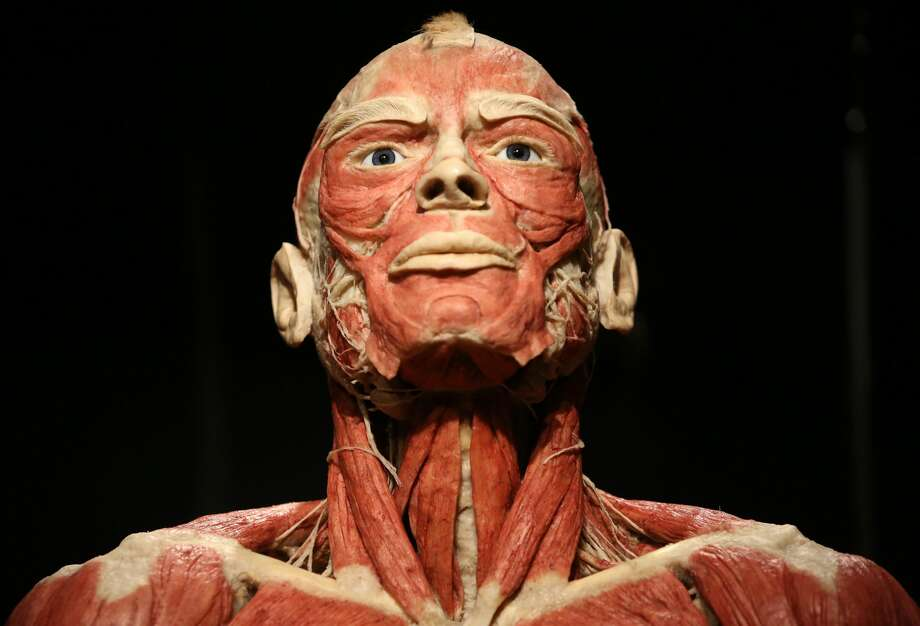PHOTOS: Body Worlds returns to HoustonOne of the most visually-stunning and humbling anatomical exhibits is coming to The Health Museum in Houston for a four-month stay.Body Worlds RX is a new traveling exhibit featuring real human bodies and body parts, showing visitors details of our inner workings in a very in-your-face way. The exhibit will be at the museum starting Jan. 14 and run until April 23.Click through to see more photos from the eye-popping exhibit... Photo: Adam Berry/Getty Images