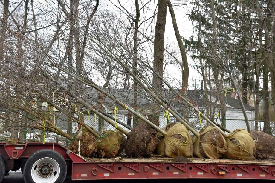 Planters Choice Nursery in Watertown donated 30 tress to the Tree Conservancy of Darien right before Christmas. Photo: Contributed / Contributed Photo