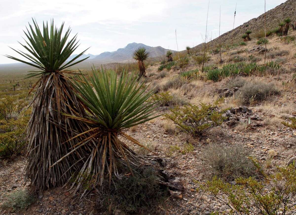 Mountain biking trails weave through Organ Mountains-Desert Peaks National Monument in southeastern New Mexico.