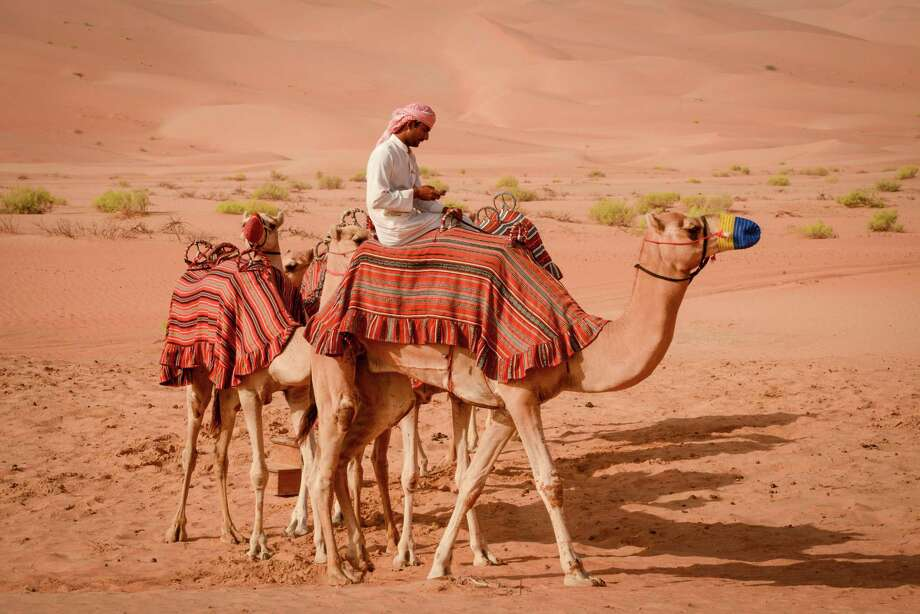 The Bedouin ship of the desert is still important in modern-day Abu Dhabi. Photo: Jill K. Robinson / ONLINE_YES
