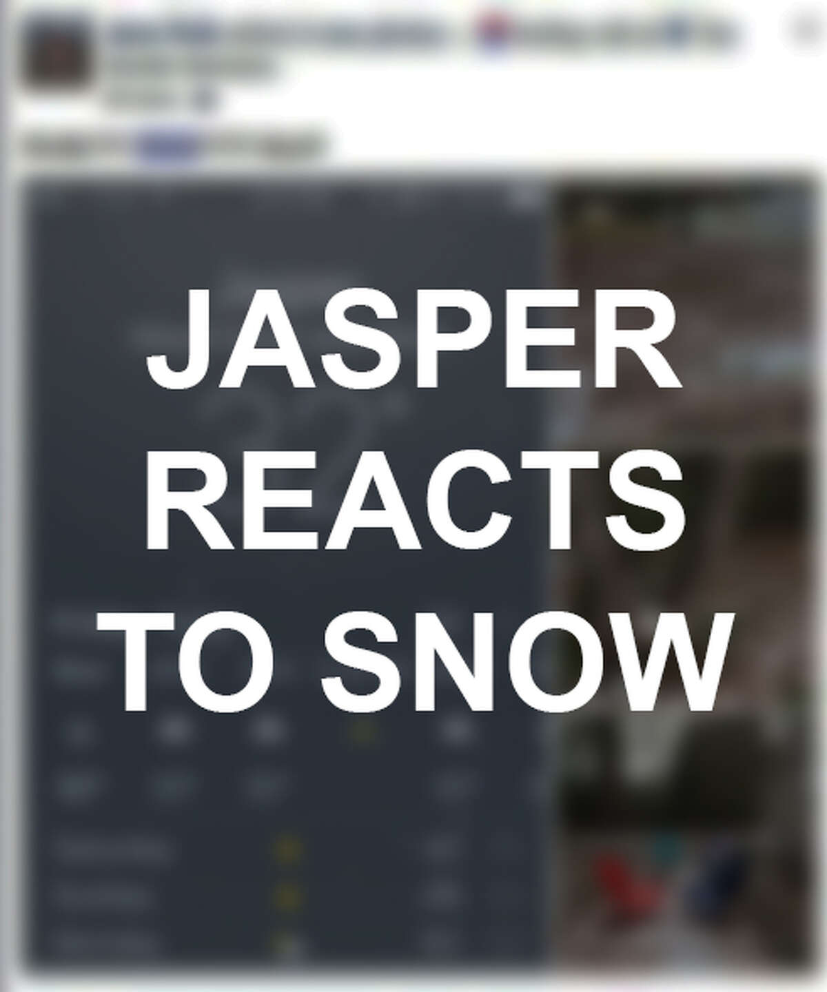 Jasper residents got a taste of some snowy weather on Friday. Scroll through the slideshow to see posts and pictures in reference to the rare weather.