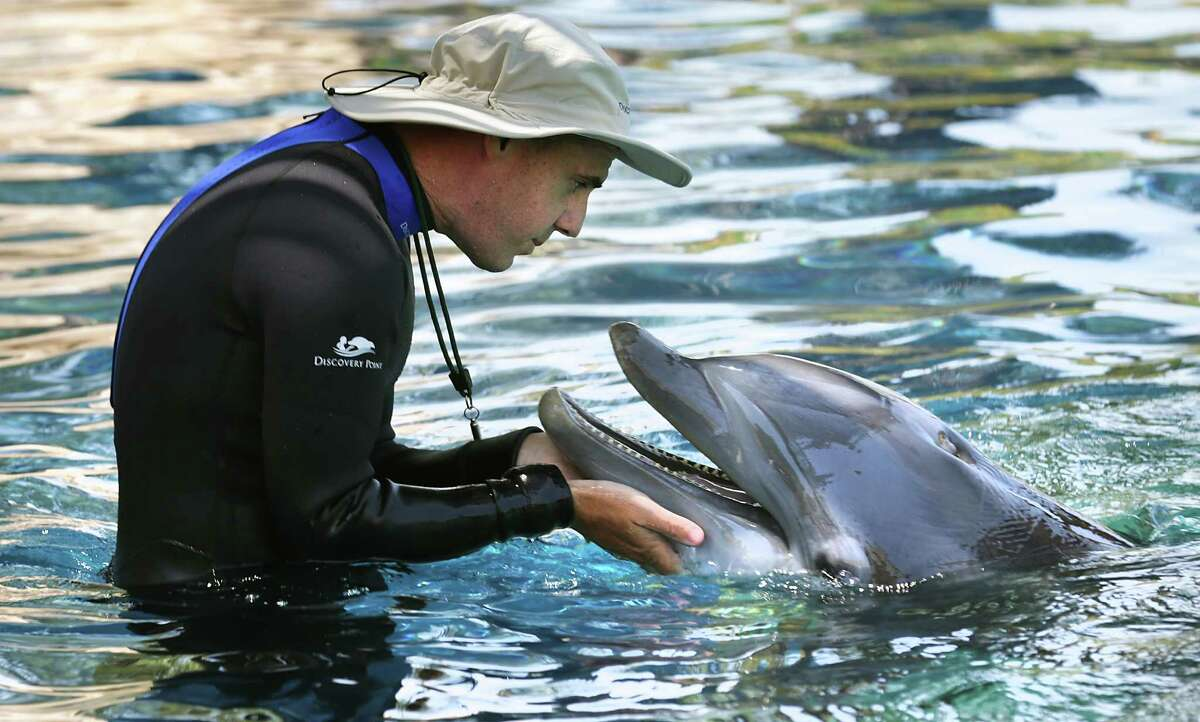 Chris Flieger, an animal trainer, interacts with a dolphin at SeaWorld Discovery Point, a new attraction at the San Antonio theme park where guest will have encounters with bottlenose dolphins. The new attraction will open Saturday, May 21, 2016.