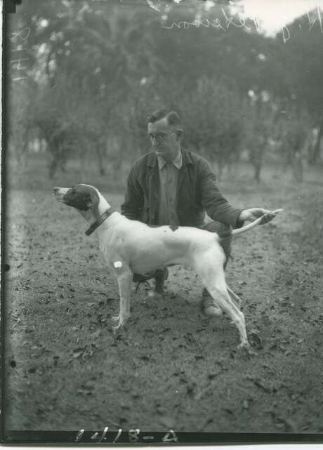 H.J. Peterson shows off his pointer, Miss Seaview, judged best dog in show at the Lone Star Bird Dog Association's first annual show, held Nov. 6, 1932, in Brackenridge Park, in this photograph from the San Antoni Light Collection. She also came in first in the amateur class. More than 1,000 spectators attended. Photo: ITC /UTSA Special Collections