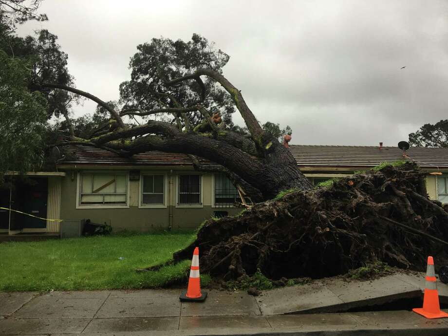 A tree crashed into a house on Brookdale Avenue near McLaren Park in San Francisco around 7:30 a.m. Sunday, and another fell onto a parked car on Fell Street near Alamo Square. Photo: Kimberly Veklerov / The Chronicle / /