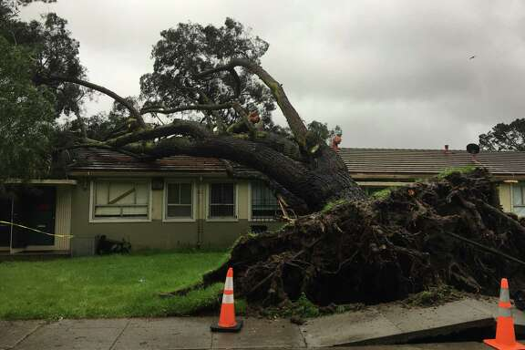 A tree crashed into a house on Brookdale Avenue near McLaren Park in San Francisco around 7:30 a.m. Sunday, and another fell onto a parked car on Fell Street near Alamo Square.