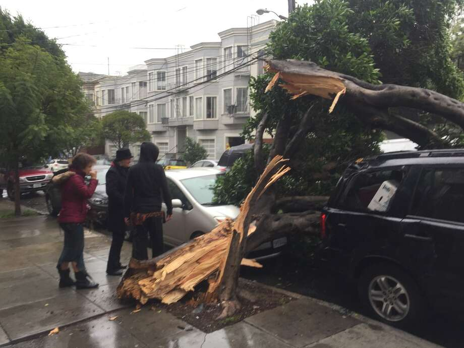 Fallen tree on 20th St. between Guerrero and Valencia in San Francisco on Sunday. Photo: Amy Graff