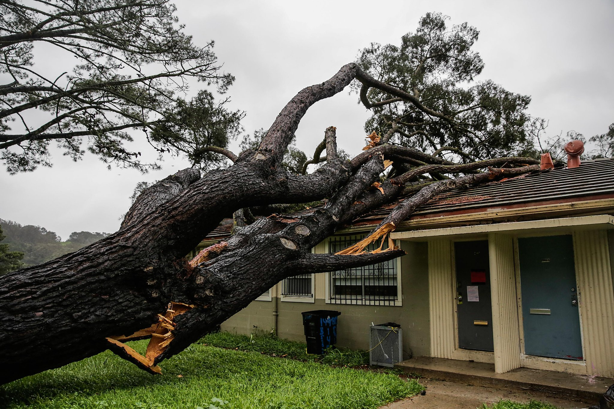 Seven Forced From Homes In Sf When Tree Falls On