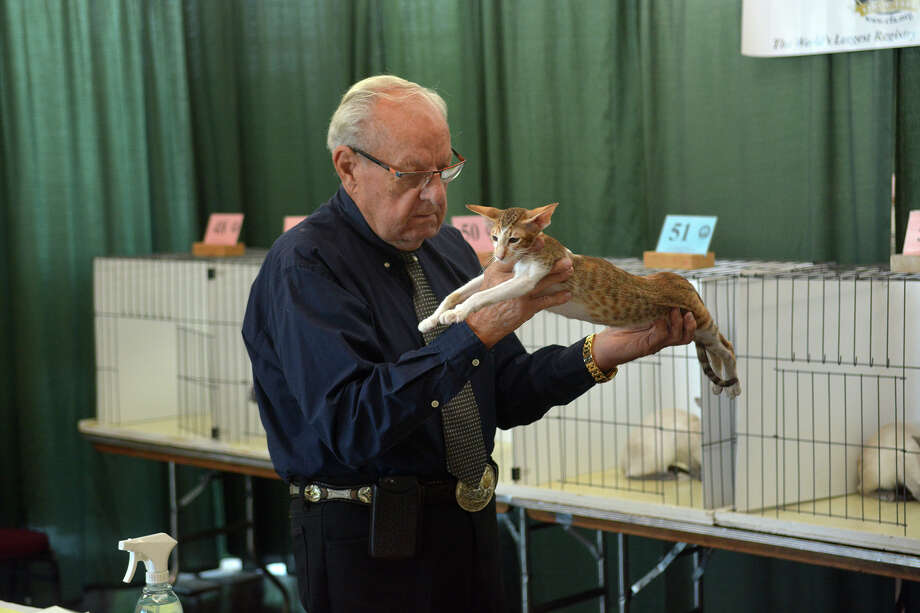 Don Williams of Ocala, Fla., judges an entrant during the Cat Fanciers' Association Cat Show held at the Humble Civic Center on Saturday.  Photo: Jerry Baker, Freelance / Freelance