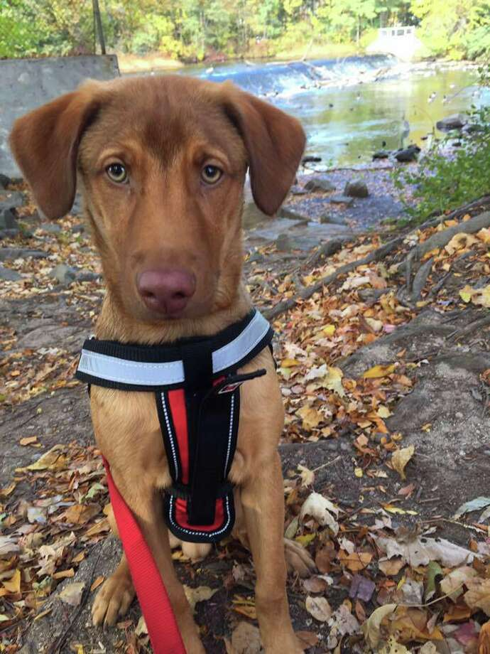 Video: Saratoga Springs puppy has a nose for news - Times Union