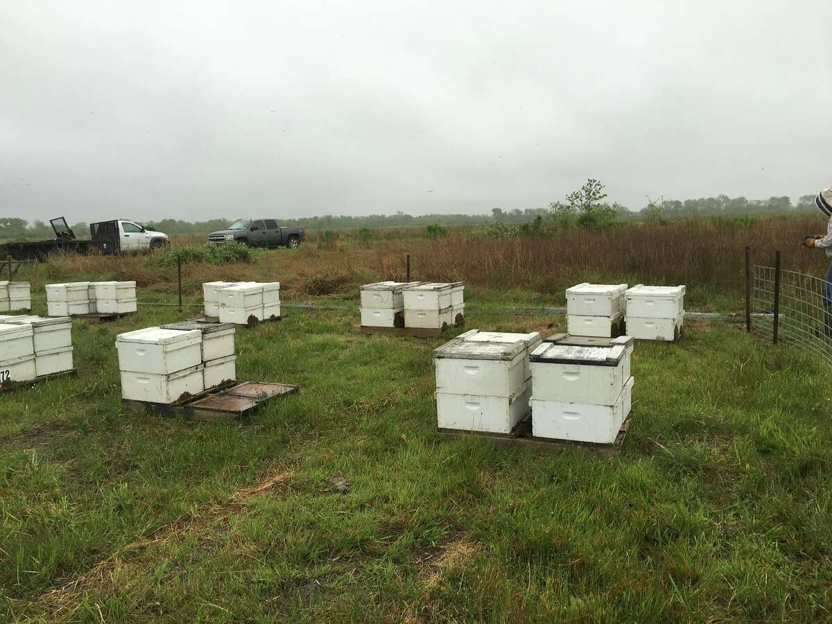 Another view of Verhoek's commercial bee operation.