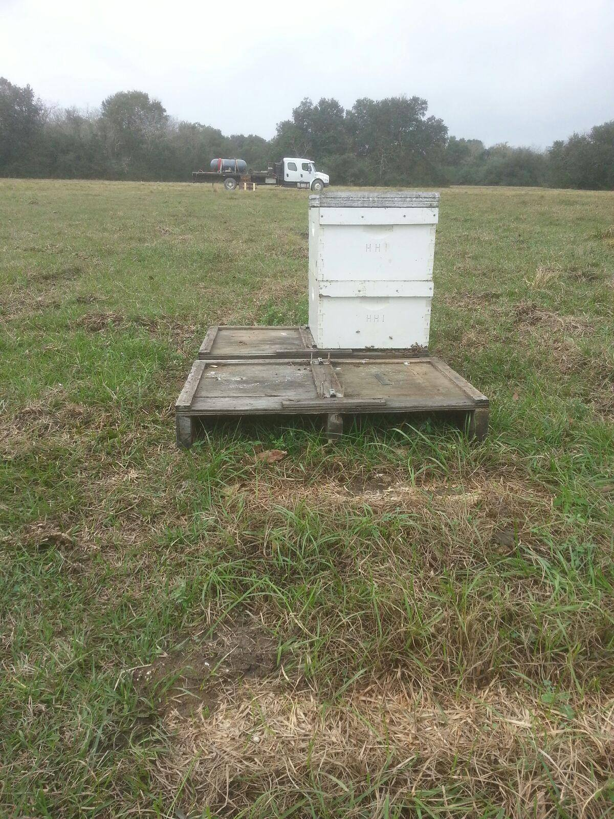 bee rustlers u0027 make off with 300 colonies in brazoria county