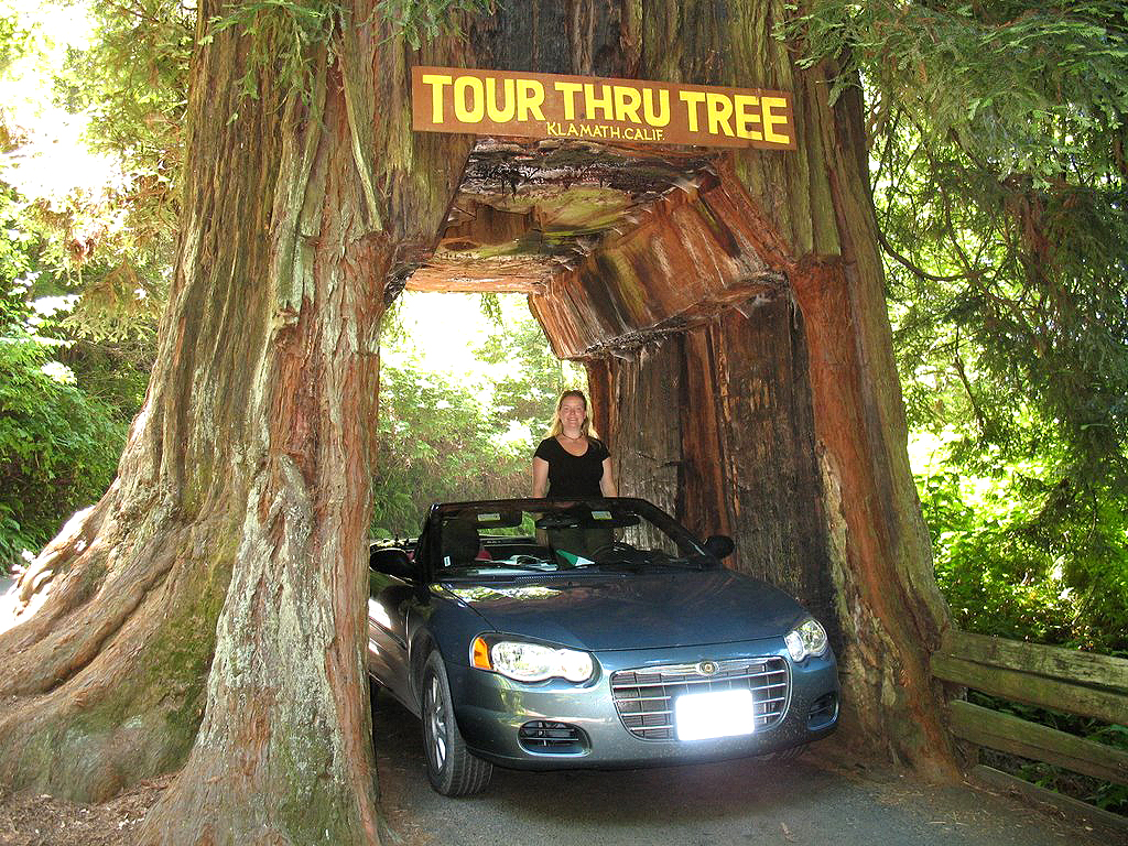The stories of californias most famous trees including some with the stories of californias most famous trees including some with top secret locations sfgate arubaitofo Gallery