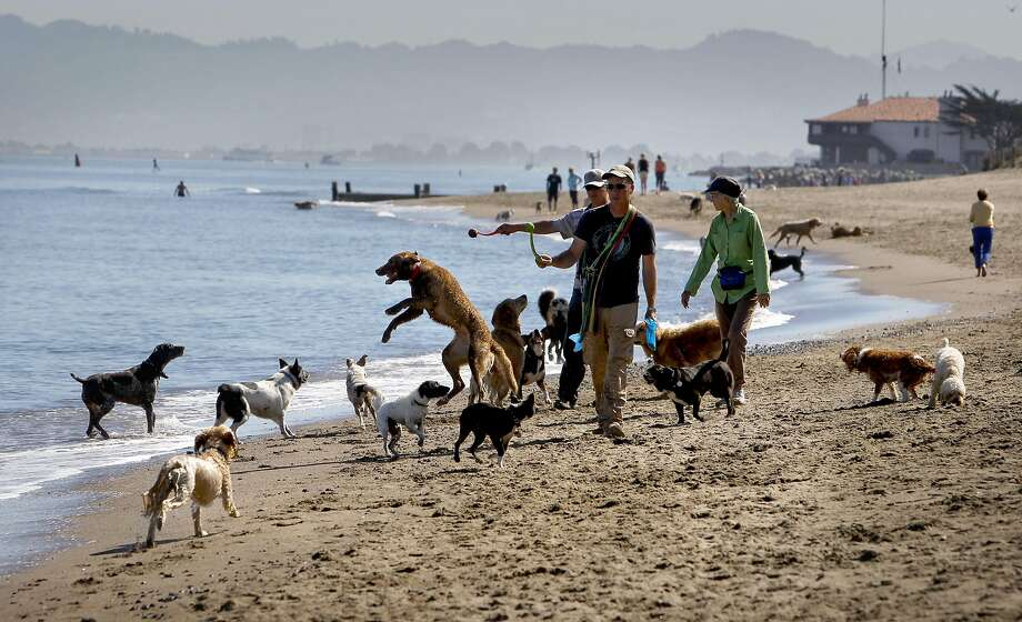 Frolicking at the beach Photo: Michael Macor, The Chronicle