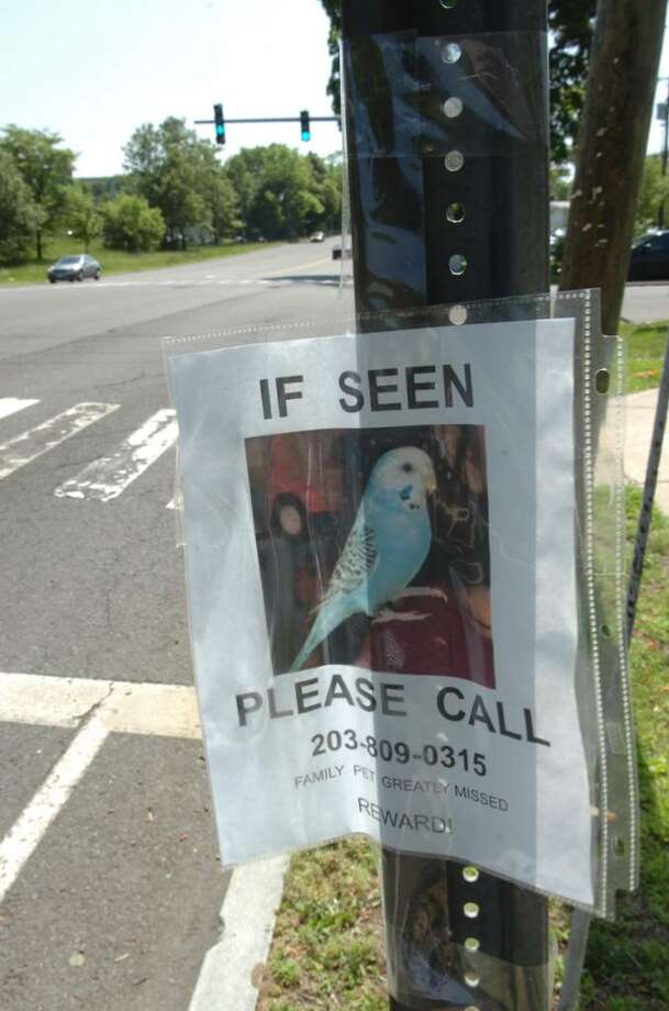 The flyer that advertised a lost parakeet posted near East Putnam Avenue, on Tuesday, May 25, 2010. Photo: Helen Neafsey / Greenwich Time