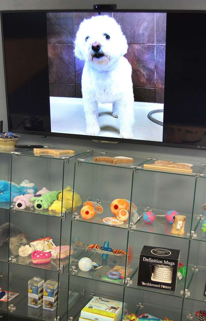 Run in with skunk leads to business venture for danbury man newstimes a television with photos of dogs that have been washed and groomed at the k9 club solutioingenieria Image collections
