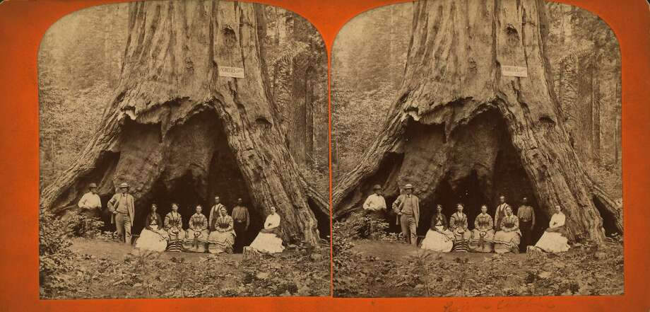 Stereographic card showing a group of men and women at the base of a large tree, California, 1869. From the New York Public Library. (Photo by Smith Collection/Gado/Getty Images). Photo: Smith Collection/Gado, Getty Images