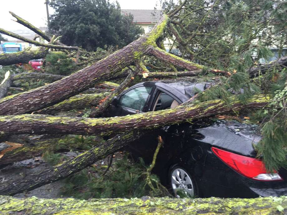 A tree that crashed at a San Francisco housing project Tuesday morning also damaged a car. Photo: Evan Sernoffsky / /