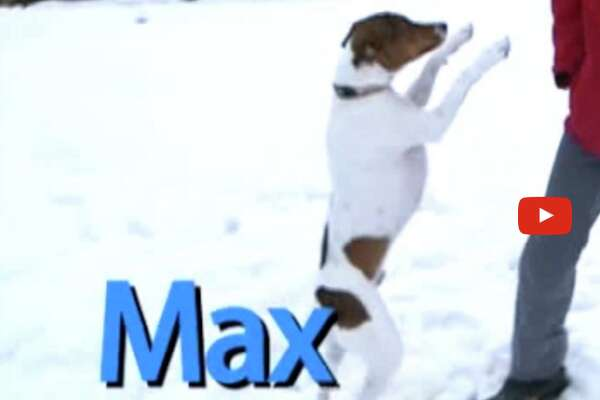Max is the Pet of the Week.
