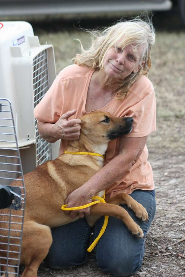 Workers transport dogs to Puppy-Dogs-R-Us in Dayton as more than 150 animals seized by the Houston SPCA are returned under a judge's order. Photo: Vanesa Brashier/Dayton News