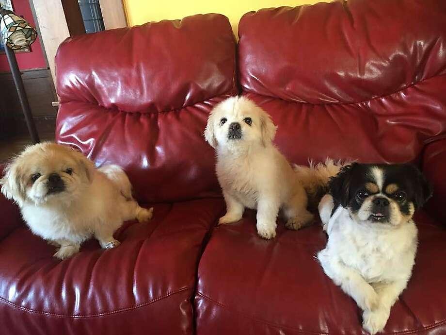 Buddyboy (left), Krypto and Bandit. Photo: Kevin Fisher-Paulson