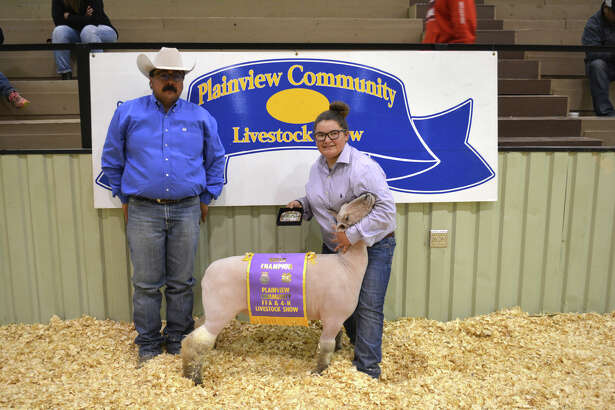 JazLee Ballesteros received Grand Champion Sheep honors Thursday at the Plainview Community Stock Show. Kelton Offield exhibited the Reserve Grand Champion Lamb while Kora Thomas received Showmanship honors. Breed champion and reserve champion honors went to: Southdown – JazLee Ballesteros and Emily White; Fine Wood – Emily White and JazLee Ballesteros; Fine Wood Cross – Kora Thomas and Talon Ballesteros; Medium Wood – Kelton Offield and Kelton Offield.