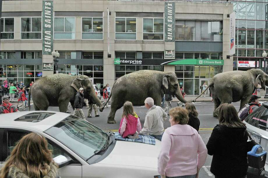 Elephants make their way in front of the Times Union Center as the elephants along with  horses with the Ringling Bros. and Barnum & Bailey Circus show paraded to the Times Union Center on Tuesday, May 1, 2012 in Albany, NY.  The circus will be at the Times Union Center from May 2nd through May 6th. (Paul Buckowski / Times Union) Photo: Paul Buckowski / 00017488A