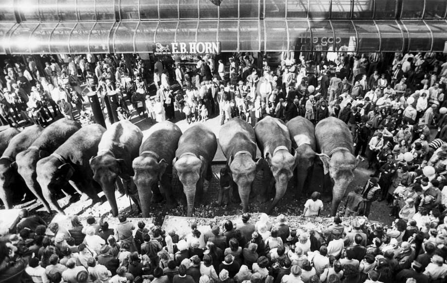 A crowd watches elephants with Ringling Brothers & Barnum & Bailey Circus parade through Downtown Crossing in Boston on Oct. 14, 1981.  (David L. Ryan/The Boston Globe via Getty Images) Photo: Boston Globe/Boston Globe Via Getty Images