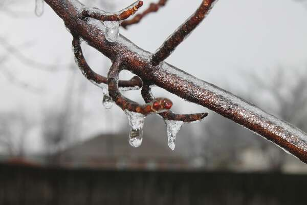 A maple tree branch is covered by ice Saturday. Winter Storm Jupiter came and went with few incidents in the Edwardsville/Glen Carbon area. Street crews stayed two steps ahead of the event making travel easy throughout the area. Edwardsville District 7 students, who had Friday off because of the potential ice storm, still had a four-day weekend as today is the Martin Luther King Jr. holiday.