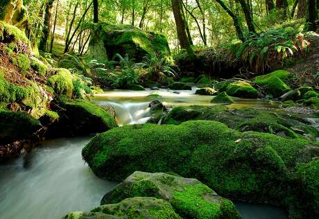 """In a time-lapse photo, Peters Creek flows in miniature cascade through rocks in Long Ridge Open Space Preserve as part of its route into Portola Redwoods and through the Bay Area's """"Lost World"""""""