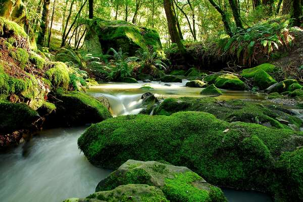 "In a time-lapse photo, Peters Creek flows in miniature cascade through rocks in Long Ridge Open Space Preserve as part of its route into Portola Redwoods and through the Bay Area's ""Lost World"""