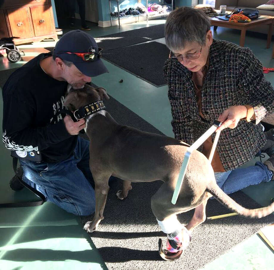Richard Nash of Castleton-on-Hudson, left, holds his dog, Hudson, who is measured at Eddie's Wheels For Pets in Shelburne Falls, Mass. Hudson's right back paw, the one that is not prosthetic, has greatly deteriorated to the point where he needs a cart and wheels to help him walk. (Courtesy Richard Nash)