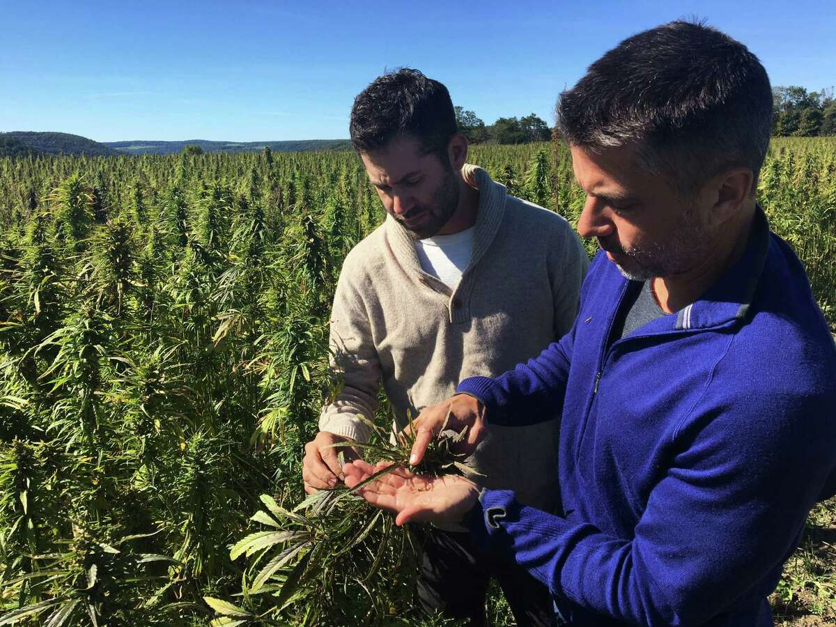 In this Sept. 25, 2016 photo, Dan Dolgin, left, and Mark Justh examine seeds from hemp plants on their JD Farms in Eaton, N.Y. JD Farms in central New York harvested the state?'s first legal hemp this fall under a university research partnership. (AP Photo/Mary Esch) ORG XMIT: RPME101