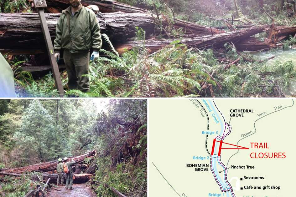Rangers at Muir Woods National Monument work on Wednesday to clear trails blocked by several redwood trees that fell over night and prompted the closure of the park in Marin county.